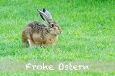 "FineArt-Card  ""Grußkarte Frohe Ostern(Hase)..."" auf Tecco-Papier"